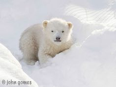 Reason 9: This photo | 21 Reasons Why Kali Is The World's Cutest Orphaned Baby Polar Bear
