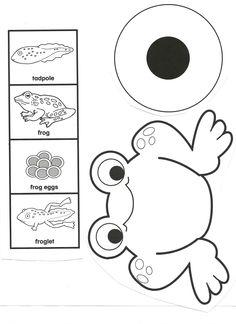 Frog Life Cycle.pdf - Google Drive
