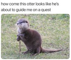 10 Best Funny Photos for Saturday Morning. Serving only the best funny photos in 2019 that will help you laugh today. Funny Animal Jokes, Funny Animal Pictures, Cute Funny Animals, Funny Cute, Otters Funny, Animal Humour, Baby Otters, Baby Sloth, Really Funny Memes