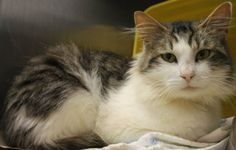 Batson: Beautiful male,  only a year old, is out of time at high-kill shelter