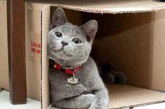 I love my box