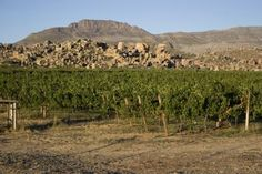 Vineyards in the Cedarburg mountains Setting Option, Fun Places To Go, Touring, Wines, South Africa, Vineyard, Photo Galleries, Beautiful Pictures, This Is Us