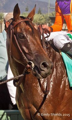 Beholder post race #oneofthespecialones