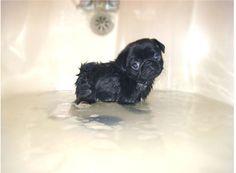 Cute Puppy in Bathtub <3