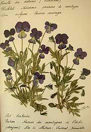 Act III scene i Titania: ...while thou on pressed flowers dost sleep;