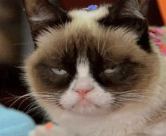 """Oct 2014: The Verge comments on Grumpy Cat's new Christmas movie - """"Grumpy Cat's new movie shows she should have stayed a meme"""" #GrumpyCat"""