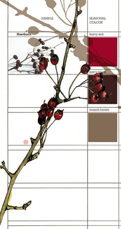 Planet Sam: Colour from the season - Hawthorn berry red