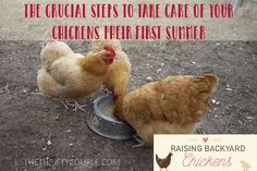 Raising Backyard Chickens: Crucial Steps To Take Care Of Your Chickens Their First Summer