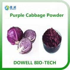 Purple Cabbage Powder - Dowell Bio-Tech focus on producing 100% pure natural fruit and vegetable powders by the advanced manufacturering technology. All the raw materials comply with organic standards, contains variety of vitamins and acids; With pure flavor, good taste, super water solubility, can be widely used in pharmaceutical and health care products, health food, infant food, beverage, dairy products, sport drinks and other fields.