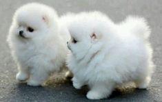 Lil walking puffs