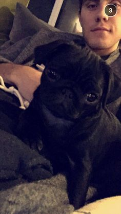 "Outstanding ""pug puppies""xx info is readily available on our web pages. Check it out and you will not be sorry you did. Black Pug Puppies, Bulldog Puppies, Cute Puppies, Cute Dogs, Pointless Blog, Youtube Quotes, Animals And Pets, Cute Animals, Zoella"
