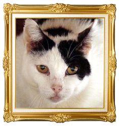 32 Best Rainbow Bridge images in 2012 | Cats, Animals, Kitty cam