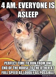Why do cats do this every damn night! - http://www.animallols.com/cats/why-do-cats-do-this-every-damn-night/