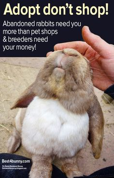 Buying a bunny? Reasons why it's so much more rewardable in so many ways to always ADOPT & never shop buy a rabbit! Buy A Bunny, Cute Bunny, Bunny Pics, Animal Shelter, Animal Rescue, Benny And Joon, Bunny Care, House Rabbit, Stop Animal Cruelty