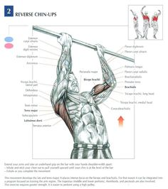 Reverse Chin Ups ~ Re-pinned by Crossed Irons Fitness