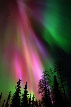 Northern Lights ☆☆☆★