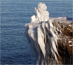 Iced tree on Lake Superior