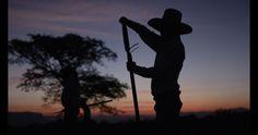 Ford y José Cuervo fabricarán piezas de coche a partir de agave