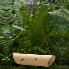 ladybug can eat dozens of aphids a day and now you can easily attract these beneficial bugs to your yard and garden with this cool new Bamboo Ladybug Feeder. Just hang this natural bamboo feeder, bait it by adding a few raisins and they will come. It provides them a structural habitat to live on and the raisins provide food after they've cleared the garden of nasty pests.