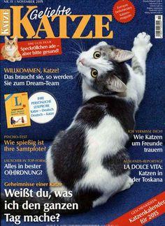 Auslands-Reportage - La dolce vita: Katzen in der Toskana. Gefunden in: Geliebte Katze, Nr. 11/2014