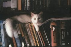 Vipassana Redlich: sobre livros (dica)