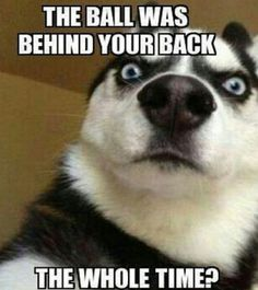 Funny-Dog-Pictures-with-Caption-28