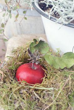 gestalten mit kübelpflanzen - der obi ratgeber zeigt wie es geht, Garten und erstellen