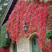 Znalezione Obrazy Dla Zapytania Kwiaty Na Balkon Pnace Lamp Post Structures