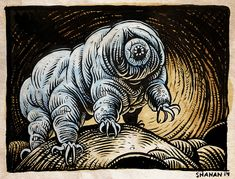 Tardigrade can survive five extinctions and counting .dotdotdot