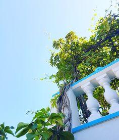 Sunny day...☉☀🌝☉ 🌏 www.angelosalonissos.com #angelos_apartments #alonissos #sporades #greece #summer2017 #surroundings #jungle  #balcony