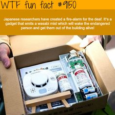 WTF Fun Facts is updated daily with interesting & funny random facts. We post about health, celebs/people, places, animals, history information and much more. New facts all day - every day! Wtf Fun Facts, Funny Facts, Random Facts, Odd Facts, Random Things, Random Stuff, The More You Know, Did You Know, Japan Facts