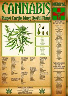 People have been using cannabis (marijuana) for a variety of purposes for centuries. Did you know cannabis and coconut oil can kill cancer cells? Medical Marijuana, Weed Facts, Marijuana Recipes, Endocannabinoid System, Cannabis Plant, Cannabis Shop, Mental Health, Cool Stuff, Gardening