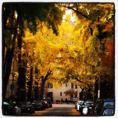 DC in November
