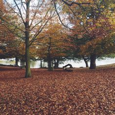 Autumn leaves in Richmond Park Richmond Park, Dark Autumn, Creative Outlet, Autumn Leaves, Places Ive Been, London, Plants, Photography, Travel