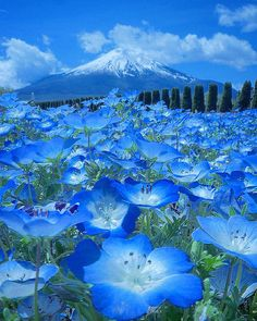 National Destinations: Yamanashi, Japan Photo by Yamanashi, Ibaraki, Beautiful World, Beautiful Places, Monte Fuji, Japan Photo, Nature Wallpaper, Nature Pictures, Amazing Nature