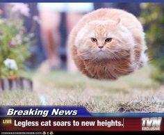 Legless cat