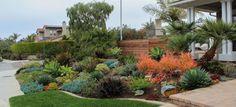 Barrels and Branches | Encinitas, CA