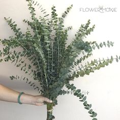 Baby eucalyptus | Eucalyptus Bouquet | DIY bride | DIY flower ideas | DIY wedding ideas | DIY bouquet ideas | DIY bridesmaid | DIY bridal bouquet ideas