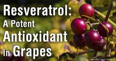Research shows that resveratrol, a potent antioxidant found in a number of plants, including red grape skins, may help treat cancer. http://articles.mercola.com/sites/articles/archive/2013/10/28/resveratrol-cancer-prevention.aspx