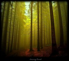 Dreaming forest