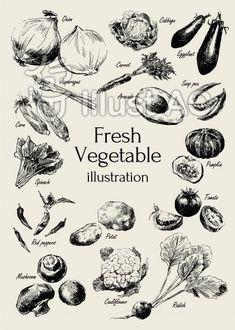 新鮮野菜イラスト