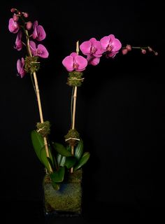 This is a purple phalaenopsis orchid plant.  See our entire selection at www.starflor.com.  To purchase any of our floral selections, as gifts or décor, please call us at 800.520.8999 or visit our e-commerce portal at www.Starbrightnyc.com. This composition of flowers is generally available for same day delivery in New York City (NYC). OP025 Phalaenopsis Orchid, Orchid Plants, Orchids, Portal, Composition, Nyc, Delivery, York, Purple
