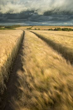 Composition: Leading Lines and Vanishing Points | Nature TTL