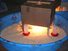 How To Build a Trouble-Free Chicken Brooder - put chicken wire around the side to extend the height of the pool sides... this will be good for the chicks until they feather out