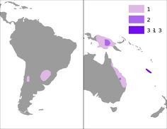 Bildergebnis fr norfolk tanne araucariaceae pinterest searching there are 19 extantspecies in new caledonia where 13 species are endemic norfolk island eastern australia new guinea argentina chile sciox Images
