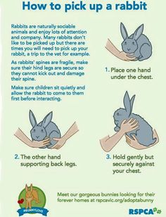How to hold a bunny.                                                                                                                                                                                 More