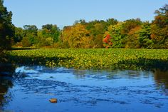 Autumns bursts of color at Silver Lake.