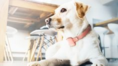 migois an iot system that connects the owner to their dog to minimize the separation anxiety through remote interaction.The iot system is composed of 4 products.a collar, a camera/speaker, a door sensor, and a smart socket.All products communicate vi…