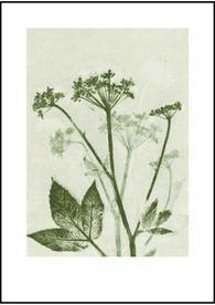 Pernille Folcarelli Groundelder green 50x70 plakat - Keiserens nye trær