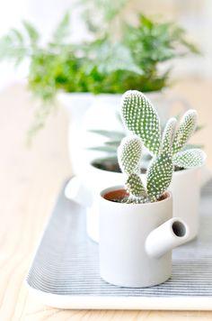 Jak udekorować roslinami wnętrze domu? Domowe plantacje! Stylish Ways To Use…